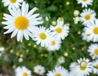 Celebrate Little Daisy Bloom and Mom Katy Perry's New Album With a Daisy Field Puzzle
