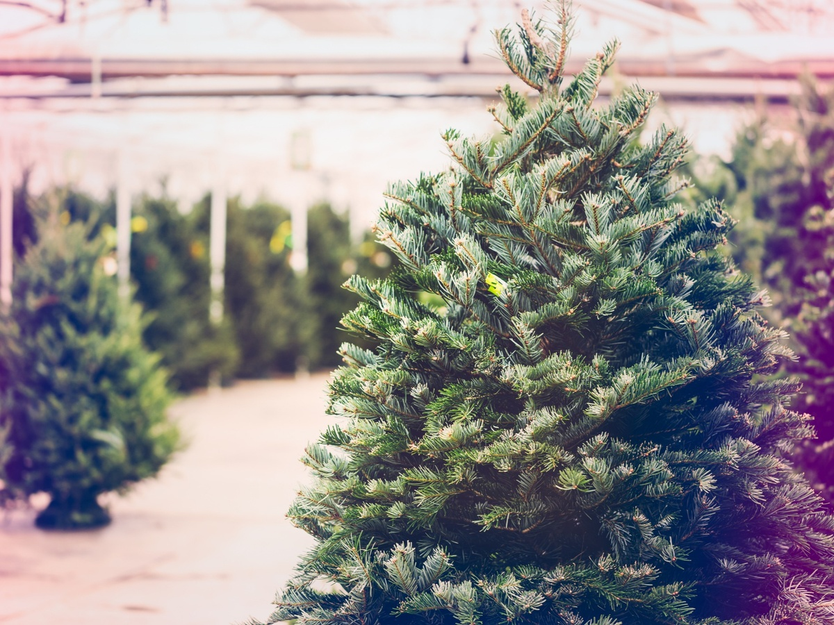 Find the Perfect Spruce in This Christmas Tree Farm Puzzle
