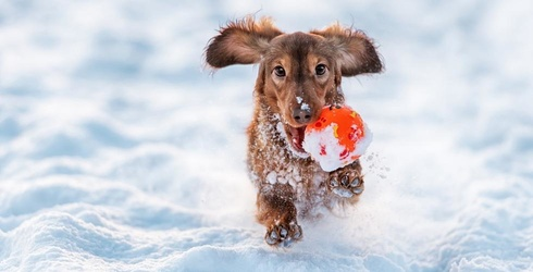 Literally Just Animals Living Their Best Lives in the Snow