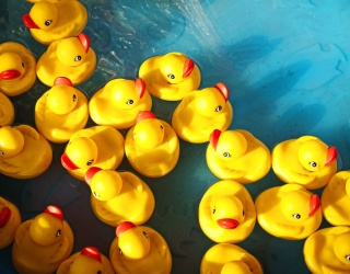 Get Your Ducks in a Row by Completing This Memory Match