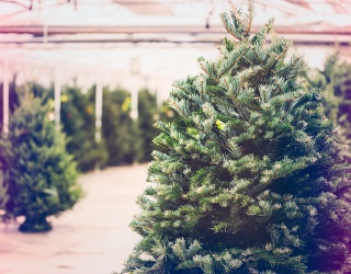 Find the Perfect Spruce After You Put This Christmas Tree Farm Puzzle Back Together