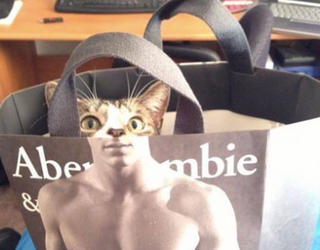 The Week in Tweets: Get This Cat a Modeling Contract