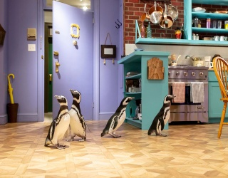 """Howard, Georgia, Fitz & Mercedes the Penguins Share the """"Friends"""" Experience"""