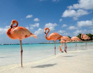 Bahamas Resort Seeks Chief Flamingo Officer, Bird Lovers Flock to Apply
