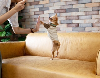 Tweets of the Week: Don't Be Fooled by Imitation Chihuahuas