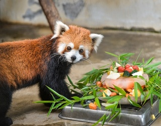 Zoo Animals Have Their Cake...And Eat It Too!