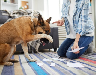 How to Combat Some of Your Dog's Bad Behaviors