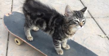 'Sick AF' Skateboarding Kitten Takes Over Twitter, Becomes Instant Celebrity