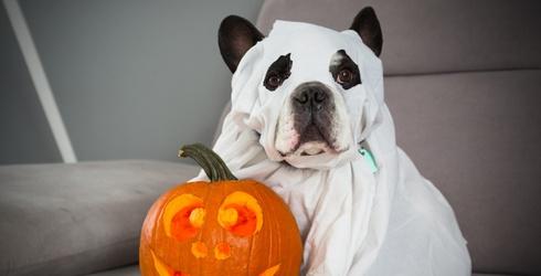 Match All the Spooky Season Ghost Photos!