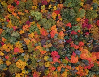 Unscramble This Dizzying Array of Fall Colors