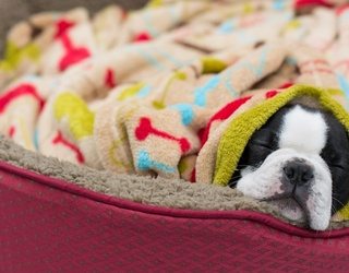 It's Getting Cold out There -- Warm up With These Pups in Memory Match Form