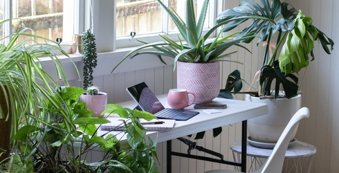 6 Beginner Friendly Houseplants