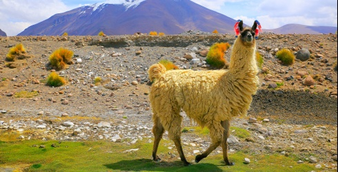 Is Your Mama a Llama? She Might Be if You Can Ace This Trivia