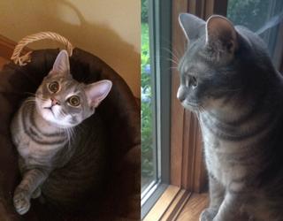 #PetStats: How Can We Resist Leo's Feline Saucer Eyes?
