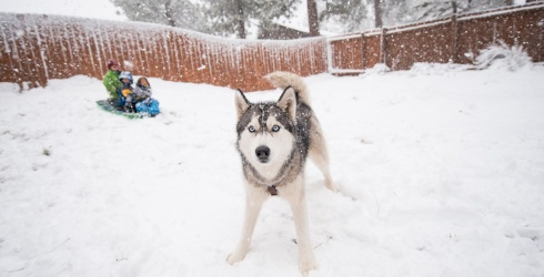 """10 Dogs Who Said, """"Nope, I'm Good!"""" When Their Humans Tried to Bring Them in From the Cold"""