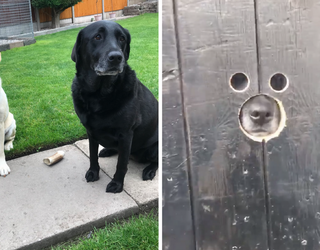 """This Peep Hole for """"Nosy"""" Dogs Might be the Greatest Invention of the 21st Century"""