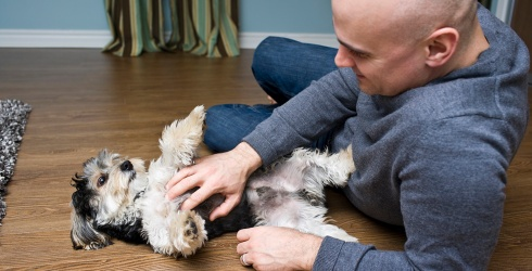 10 Doggos That Love Belly Rubs More Than Life Itself