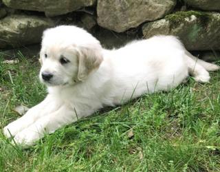 #PetStats: Hanging With Little Hooper