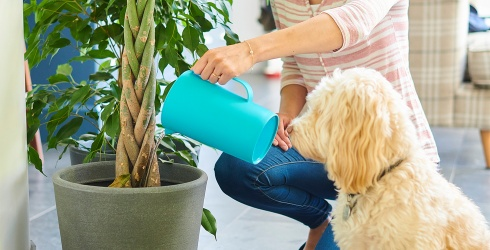 These Pet-Friendly Houseplants Will Keep Your Furry Friends Safe and Sound