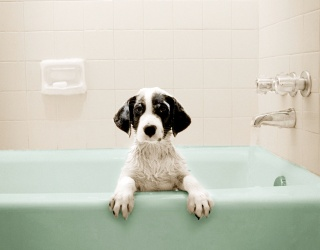 Monday Memory Madness: Scrub a Dub Dub, These Pups Are in the Tub!