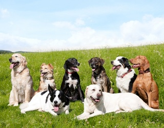 Sniff Out the Facts In This Ruff Dog Breed Trivia Test