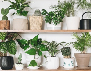 Find the Differences in These Plant Photos Before They Grow out of Control