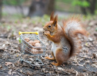 Catch All the Red Squirrels in This Memory Match!