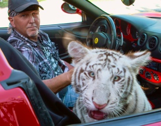 """DailyTrivia: """"Tiger King"""" Is Back for More to Help Distract You From Reality"""