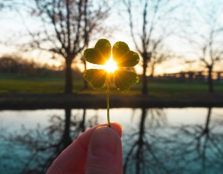 Cabinet of Curiosities: Can a Four-Leaf Clover Really Help Your Luck?