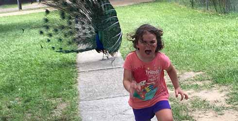Little Girl Gets Chased By Peacock, Internet Has A Field Day