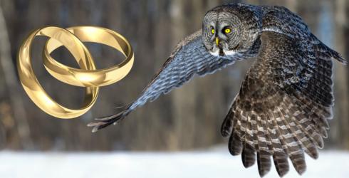 Wedding Descends into Chaos as Owl Ring Bearer Attacks Best Man