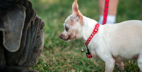 The World's Ugliest Dog Competition Is the Self-Love Event of the Year