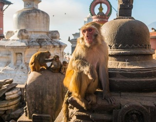 The Daily Break: Monkey Invasions and a Tech Truce