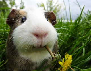 Which Small Pet Should You Own Based on Your Personality?