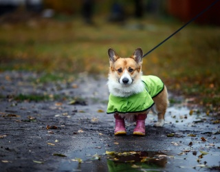 Brave the Memory Match Storm With These Pups Ready for Rain
