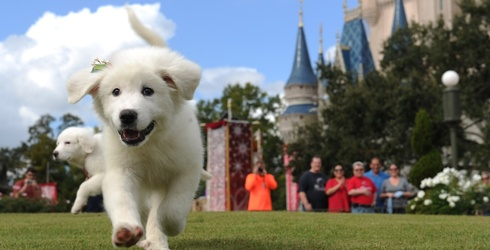 Match all These Adorable Dogs in Disney Photos
