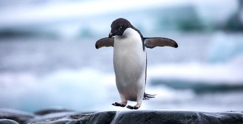 Take a Deep Dive Into Penguin Knowledge With 5 Things You May Not Know About These Little Flippers