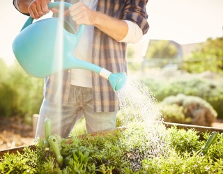 Will This Watering Can Memory Match Help You Master Your Green Thumb?