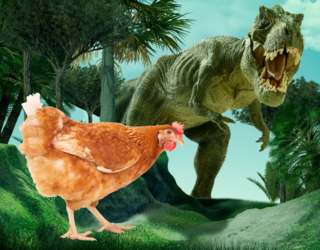 Scientists Host Bird Races in an Attempt to Learn About How Dinosaurs Move