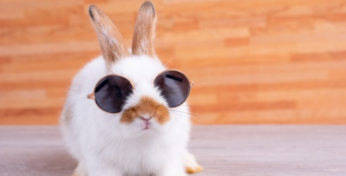 Monday Memory Madness: Find Some Solace in These Feel-Good Baby Bunny Photos