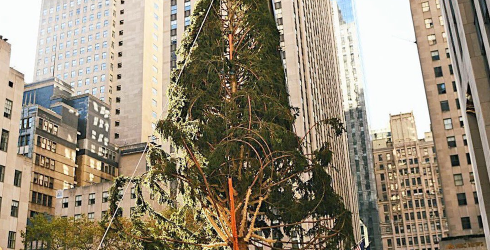 The Rockefeller Center Christmas Tree Has Had Enough of Your Judgment