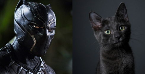 """""""Black Panther"""" Has Inspired People to Adopt Historically Overlooked Black Cats"""