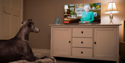 Unscramble This Sweet Photo of a Dog Watching the Queen's Comforting Speech