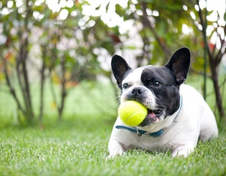 We're Serving You a Memory Match of the Greatest Four-Legged Tennis Stars in the Game