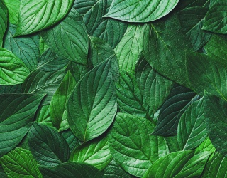 Test Your Eye for Color and Name These Shades of Green