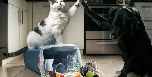 7 Videos of Cats and Dogs Doing Cat and Dog Things