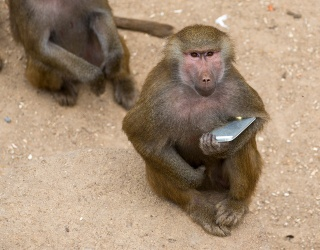 Monkey Steals Boy's Phone, Takes Several Selfies and Video