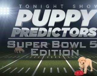 "Jimmy Fallon's ""Puppies Predict"" Super Bowl Segment Will Never Not Be Cute"