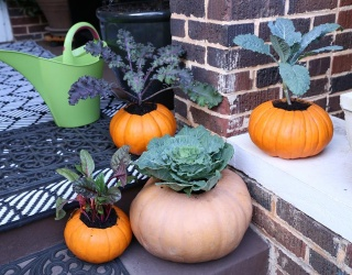 DIY Diaries: Fill Your Front Porch With Pumpkin Spice and Everything Nice