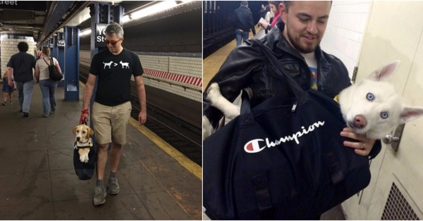 New Yorkers Find Ways to Bring Their Dogs on the Subway